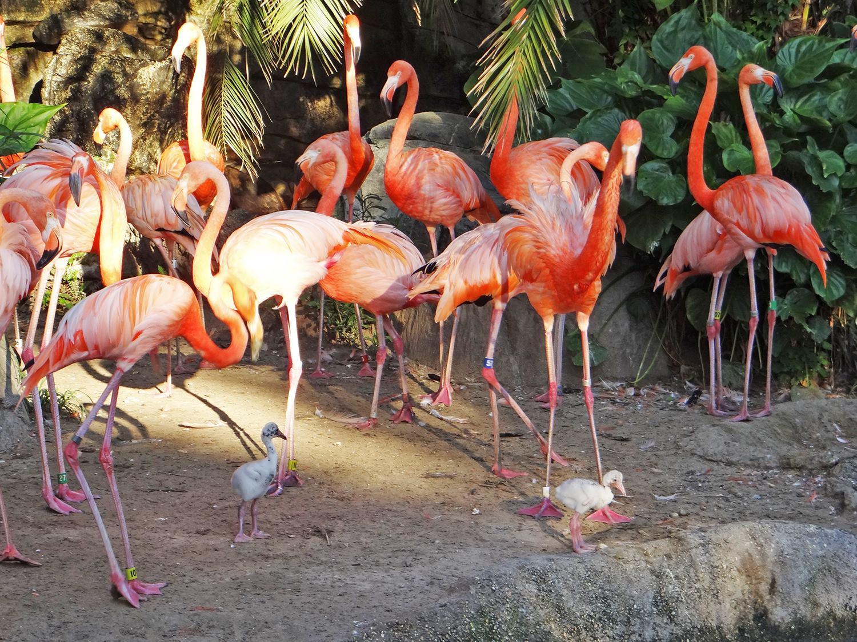 Gay Day Flamingos at the Zoo
