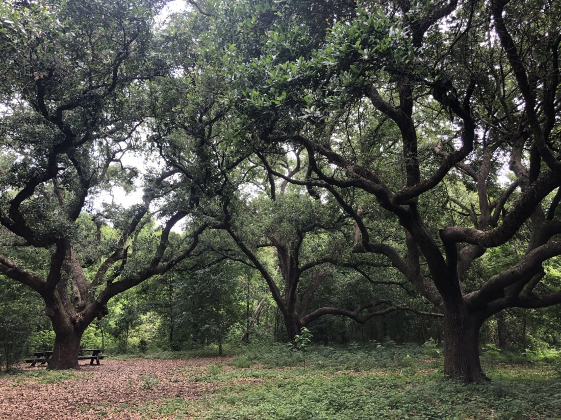 City Park's Couturie Forest (photo credit: Emily Ramírez Hernández)