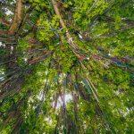 bead-tree