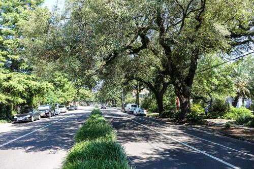 live oaks esplanade avenue new orleans