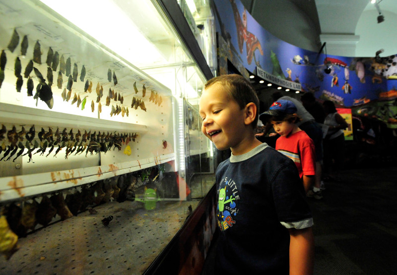 Four-year-old Craig Drize enjoys the Metamorphis Lab at The Audubon Insectarium.