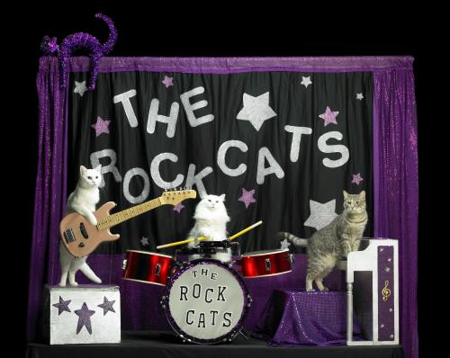 The all-feline band The Rock Cats perform at The Marigny Theatre December 5-21, 2014. Photo courtesy The Acro-Cats.