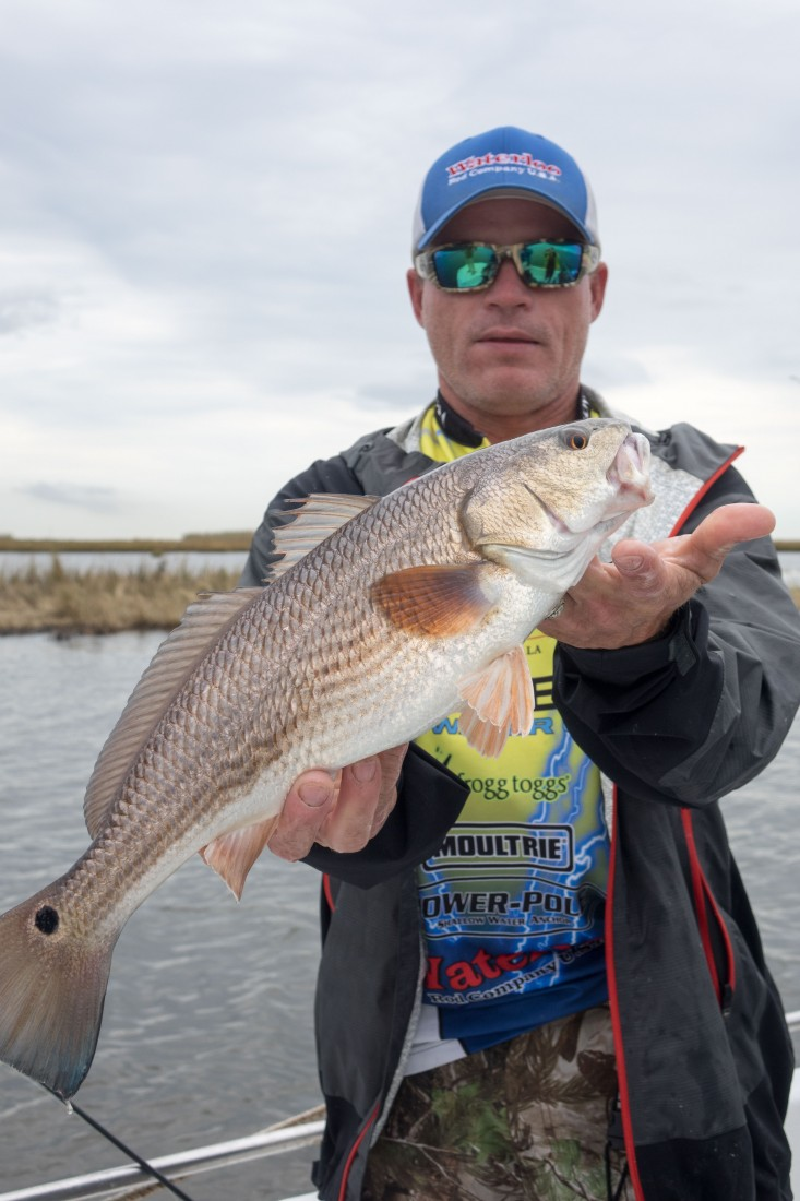 The Captain was right...there was redfish in this spot. Instinct and experience helps. Redfish are one of Louisiana's finest fish!