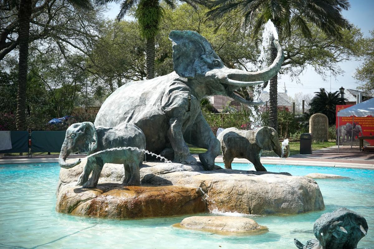 Tragic Incident at Audubon Zoo
