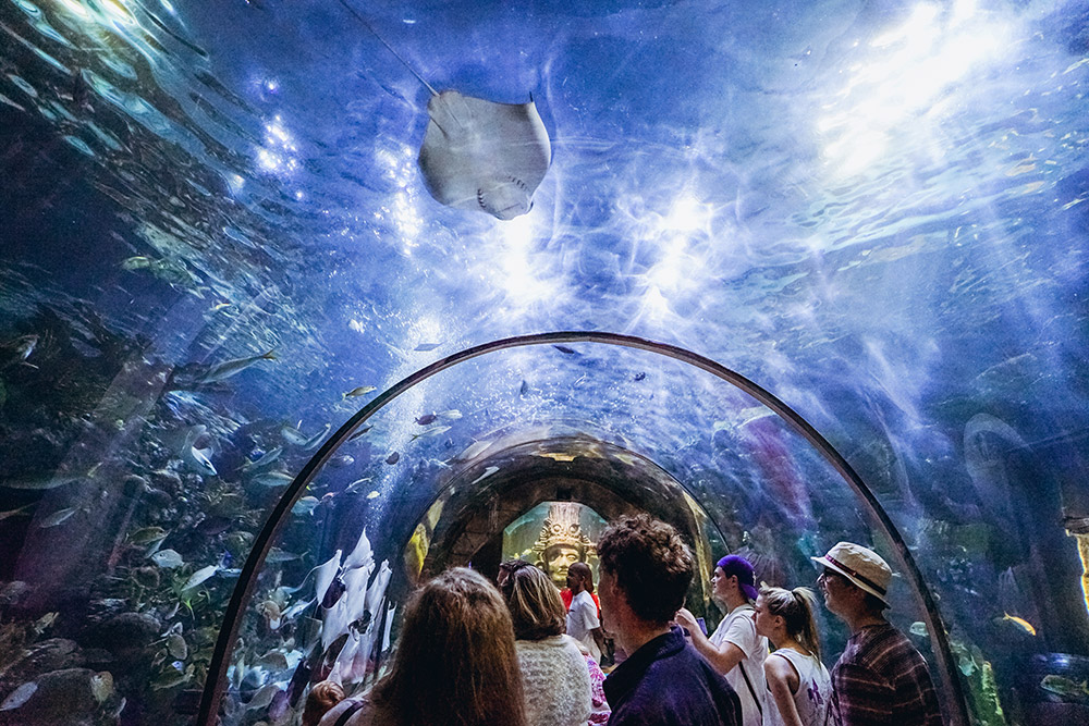 Take in the wonders at the Audubon Aquarium. (Photo: Paul Broussard)