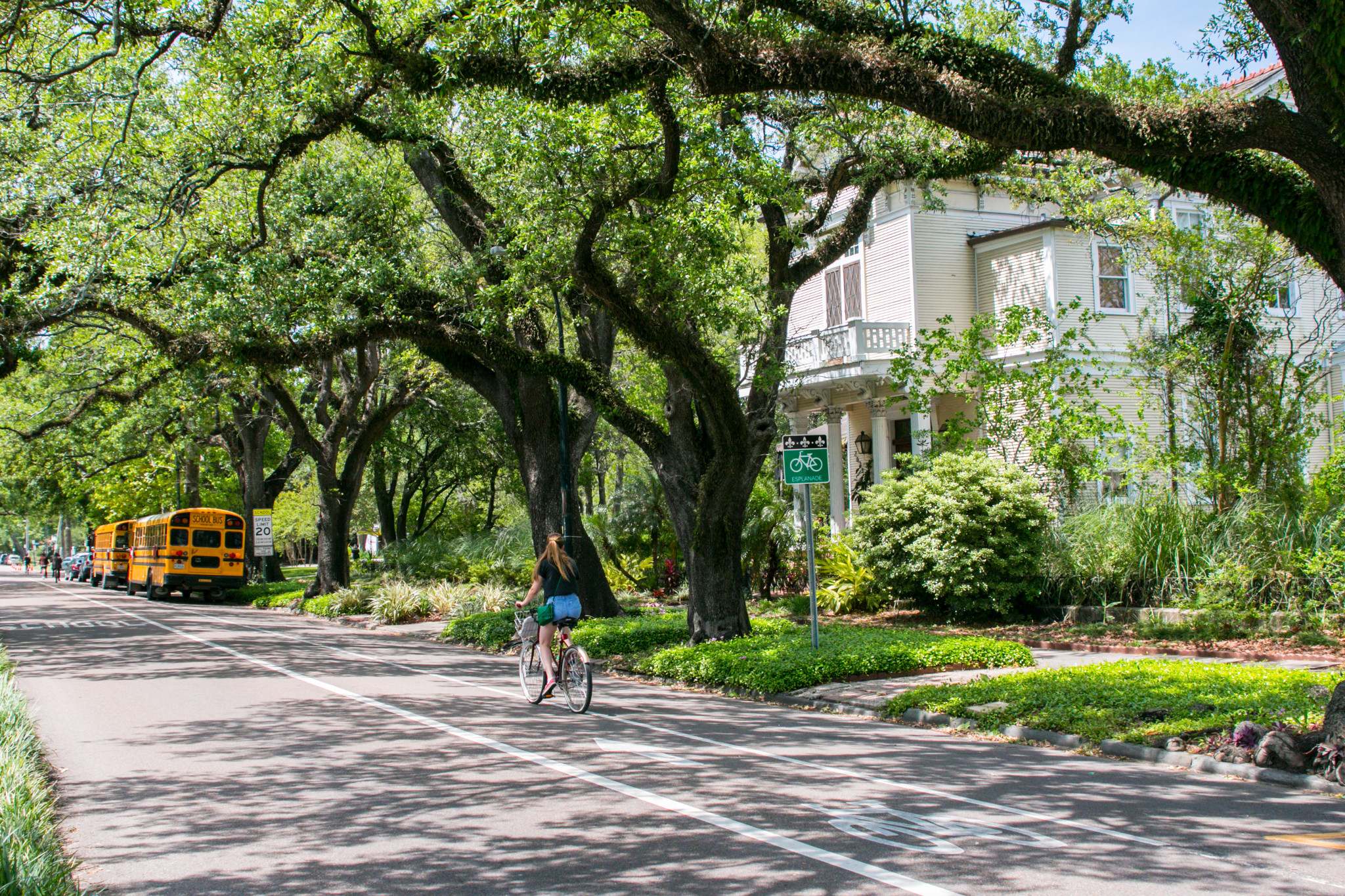 A cyclist rides along tree-lined Esplanade Avenue. (Photo: Rebecca Ratliff)
