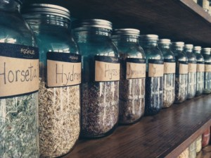 Herbs (photo by Liz Beeson)
