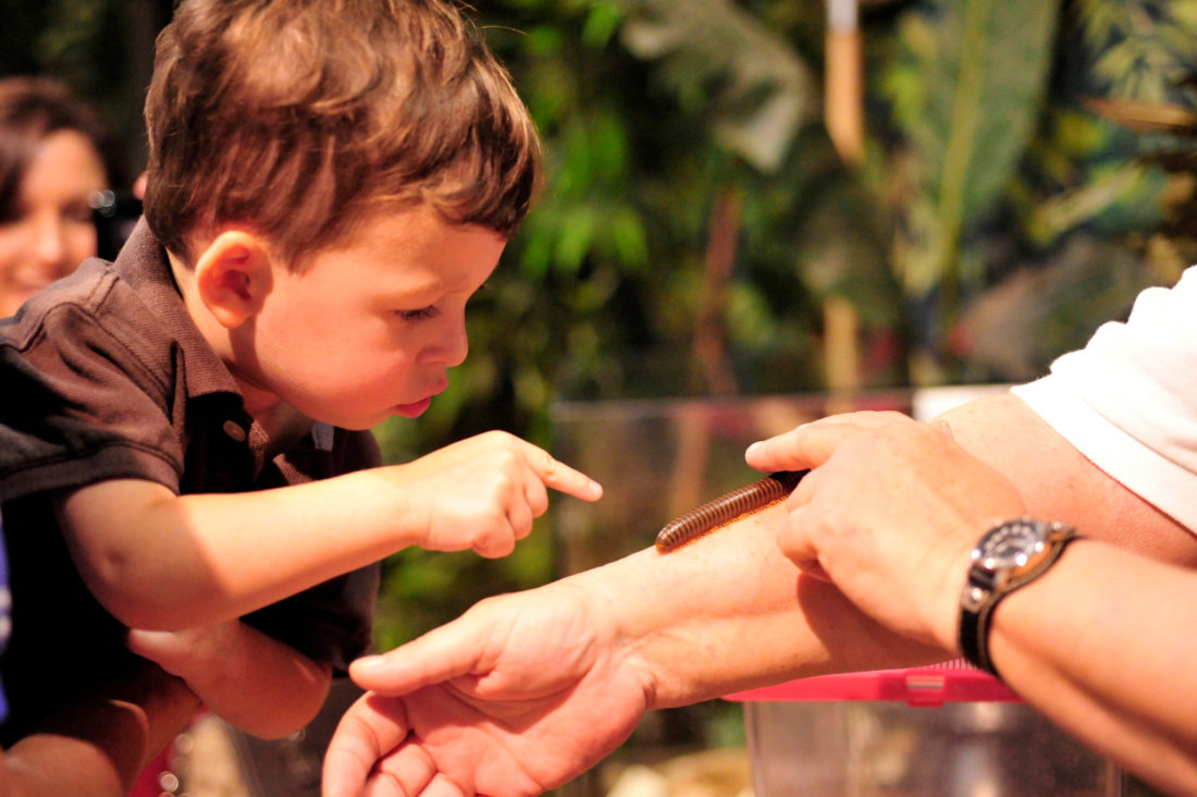 Kids can get up close with creepy crawlies at the Audubon Insectarium. (Photo: Cheryl Gerber)