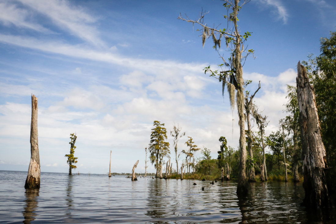 We ate lunch from our kayaks and swam in Lake Maurepas before heading back to the bayou.