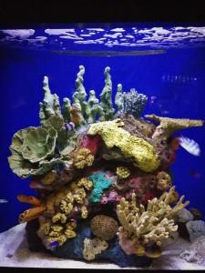 The Audubon Aquarium of the Americas is fun for all ages. (Photo: Nikki Carter