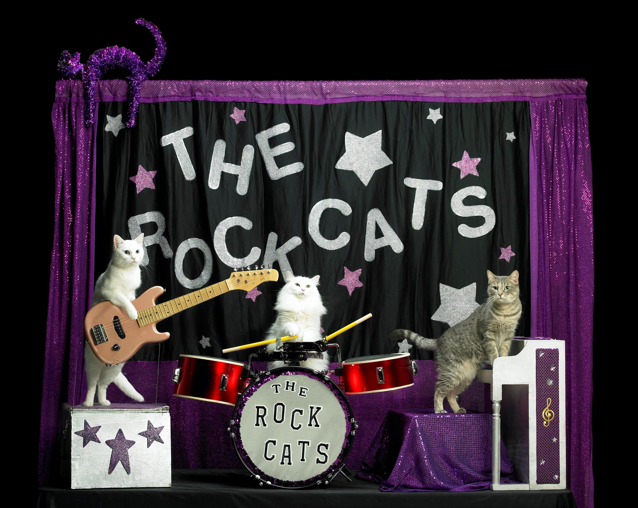 "The Rock Cats, part of the Amazing Acro-Cats, will play seasonal classics like ""A Cat in a Manger"" and ""God Rest Ye Merry Kittens."" (Photo via The Amazing Acro-Cats Meowy Catmas on Facebook)"