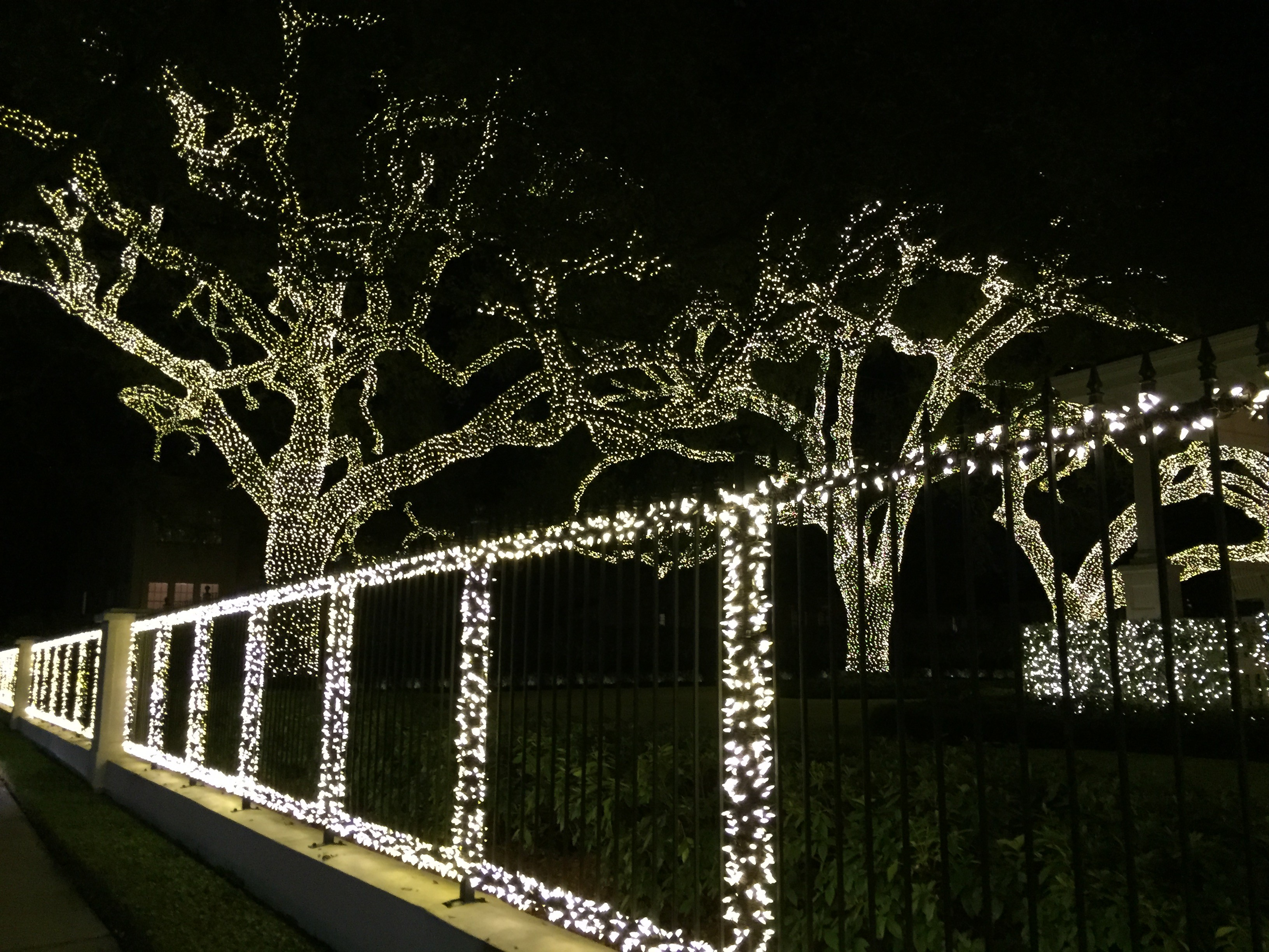 Christmas Lights In New Orleans